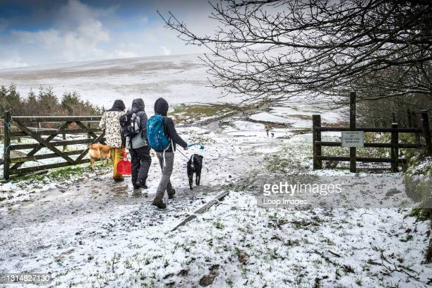 Family enjoying walking their dogs in the snow on the wild rugged Rough Tor on Bodmin Moor in Cornwall.