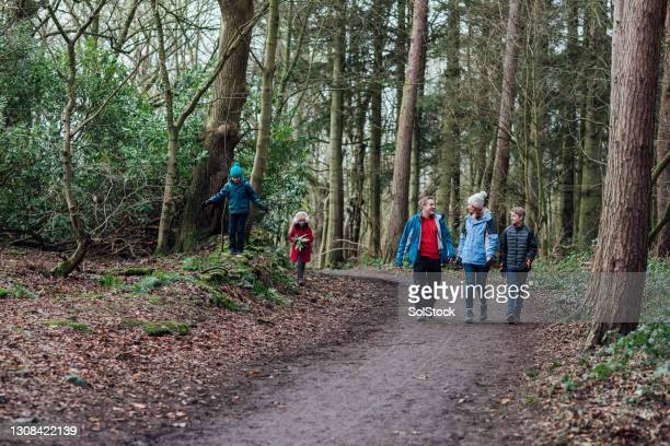 family exploring - forest stock pictures, royalty-free photos & images