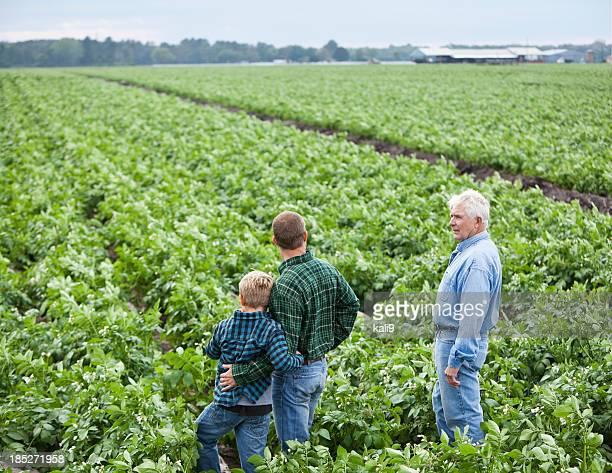 family farm - rauwe aardappel stockfoto's en -beelden