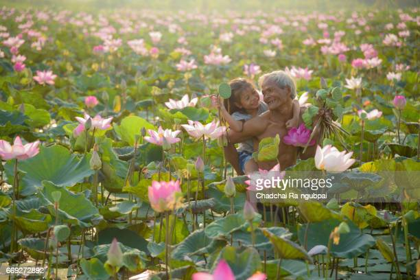 Lotus root stock photos and pictures getty images family farmer working in lotus field mightylinksfo