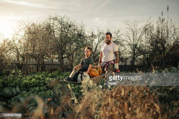family farming together - wheelbarrow stock pictures, royalty-free photos & images