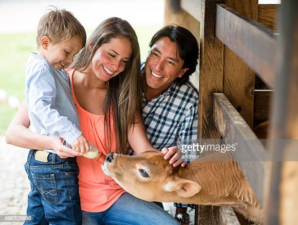Family feeding a veal