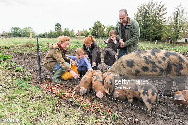 Family feeding the pigs on small holding