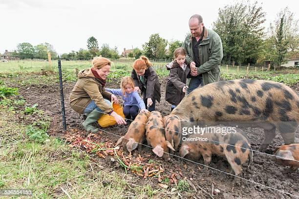 Familia de alimentar a los cerdos en pequeñas retención
