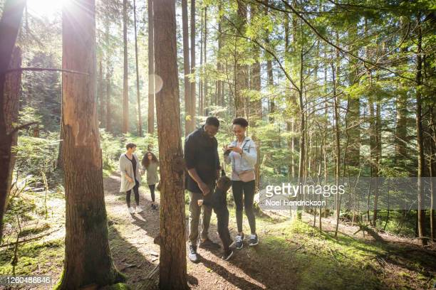 family fun in a sunlit forest - family stock pictures, royalty-free photos & images