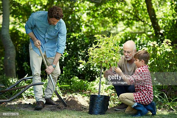 family gardening in park - planting stock pictures, royalty-free photos & images