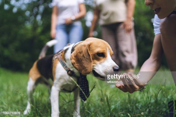 family gathering with dog in a park - hound stock pictures, royalty-free photos & images