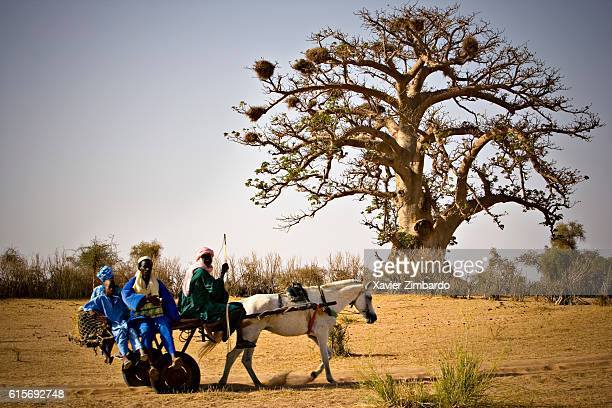 Family going to the market riding a horsedrawn on May 25 2007 at SaintLouis Senegal