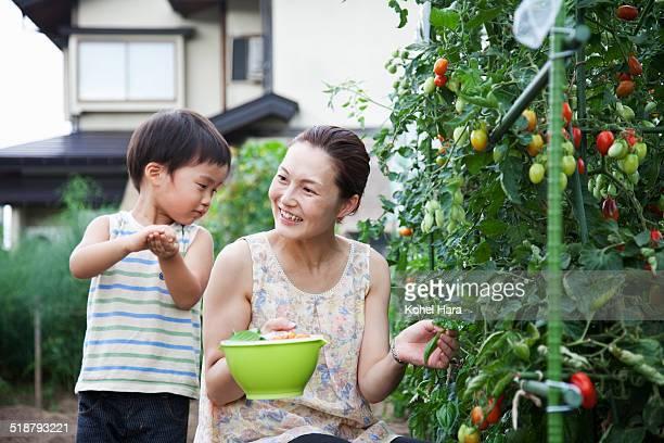 family harvesting on a farm - attività agricola foto e immagini stock