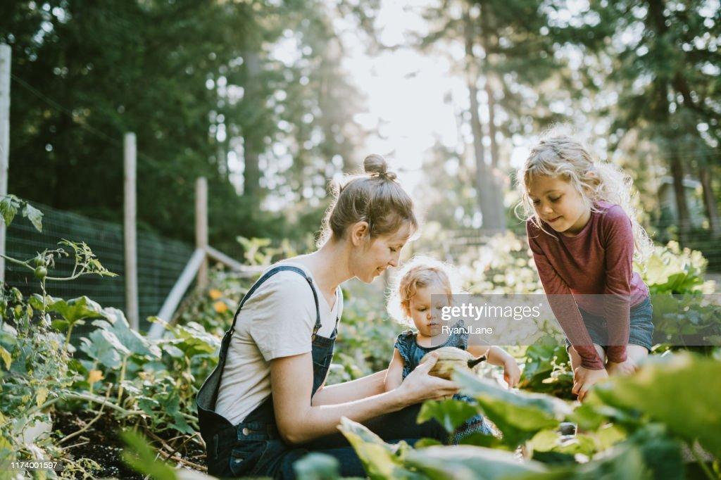 Famille récoltant des légumes du jardin à la petite ferme à la maison : Photo