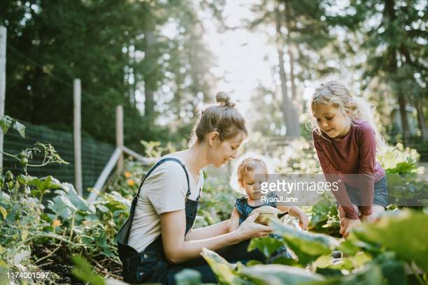 family harvesting vegetables from garden at small home farm - nature stock pictures, royalty-free photos & images