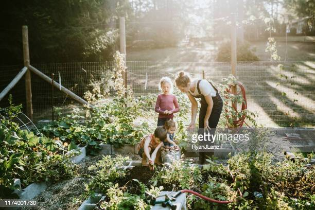 family harvesting vegetables from garden at small home farm - garden stock pictures, royalty-free photos & images