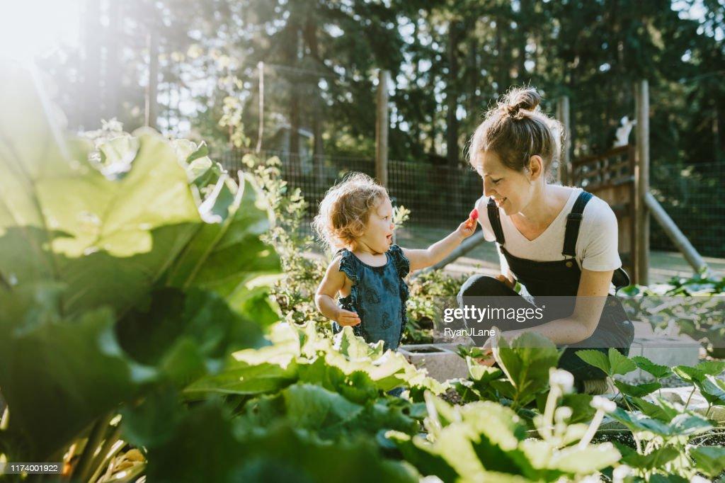 Family Harvesting Vegetables From Garden at Small Home Farm : Foto de stock