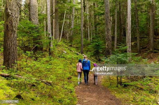 family hiking in an ancient cedar forest - day stock pictures, royalty-free photos & images