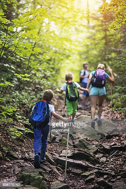 family hiking in sunny forest - buitensport stockfoto's en -beelden