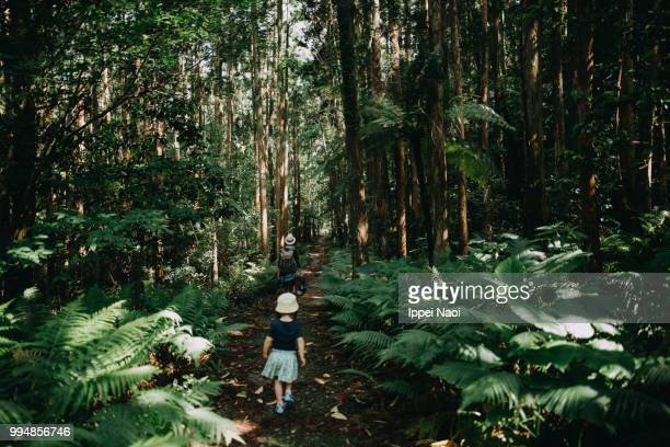 family hiking through forest of yakushima island, kagoshima, japan - エコツーリズム ストックフォトと画像
