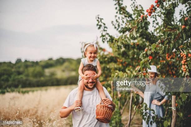 familie in de natuur - orchard stockfoto's en -beelden