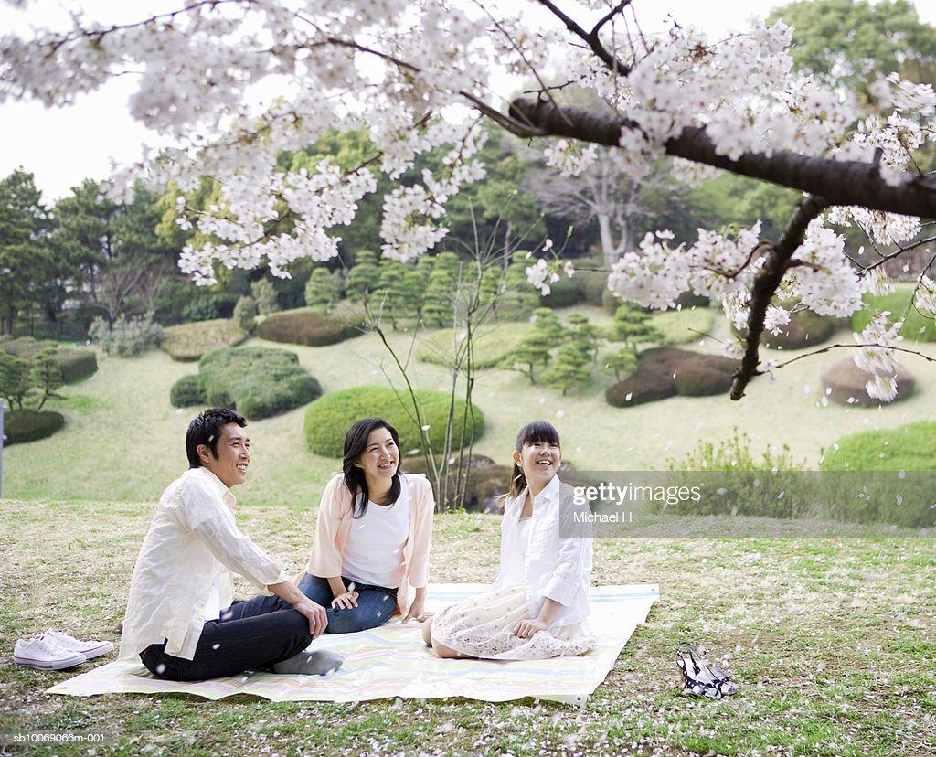 Family including girl (12-13) sitting in park under full bloomed cherry blossom : Stockfoto