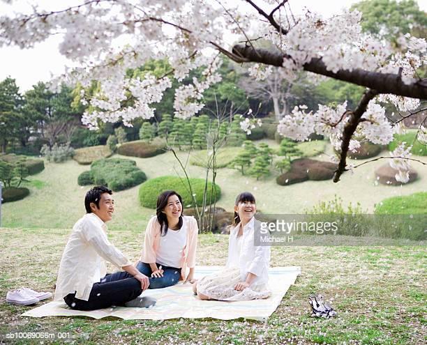 Family including girl (12-13) sitting in park under full bloomed cherry blossom