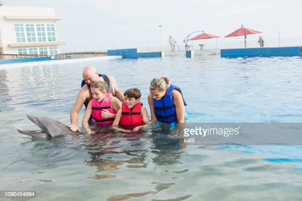 interactuar con delfines en el parque marino de la familia - animales en cautiverio fotografías e imágenes de stock