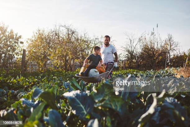 family life on the organic farm - wheelbarrow stock pictures, royalty-free photos & images
