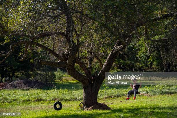 family life - one boy only stock pictures, royalty-free photos & images