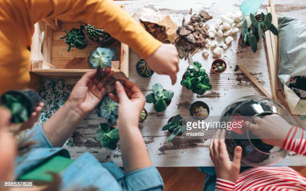 family making terrarium at home - succulent stock pictures, royalty-free photos & images