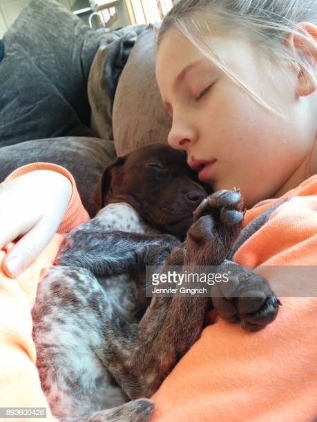 family moments - german shorthaired pointer stock pictures, royalty-free photos & images
