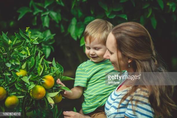 Family near citrus fruit tree in summer