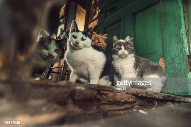 family of cats - large group of animals stock pictures, royalty-free photos & images