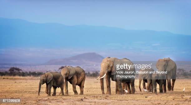 Family of Elephants Against Kilimanjaro