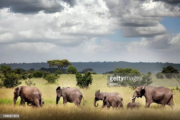 Family of elephants at  Ruaha National Park