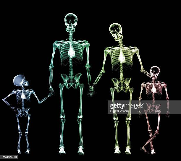 family of skeletons - human skeleton stock photos and pictures