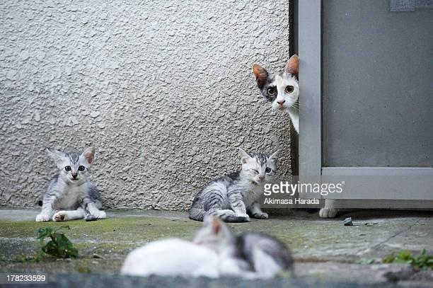 Family of stray cats