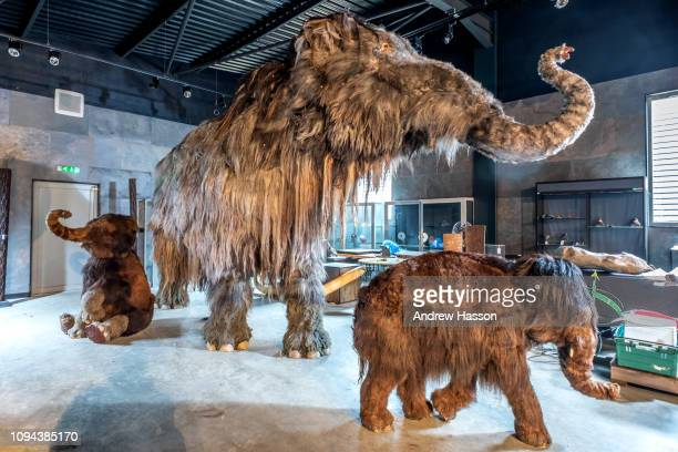 Family of taxidermied woolly mammoths photographed ahead of their appearance at an auction at Summers Place Auction House on January 14, 2019 in...
