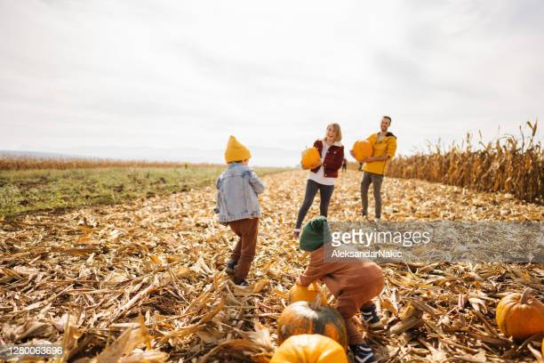 family on a pumpkin patch adventure - pumpkin harvest stock pictures, royalty-free photos & images