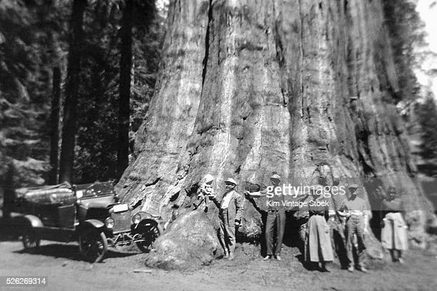 Family on an outing in California gathers around a Redwood tree, ca. 1915.