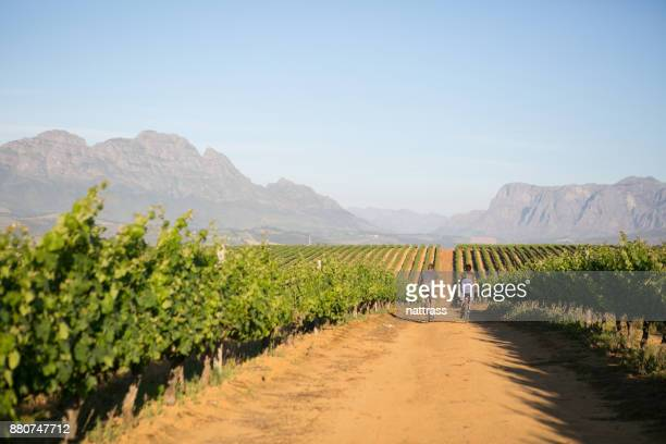family out on a ride together - stellenbosch stock pictures, royalty-free photos & images