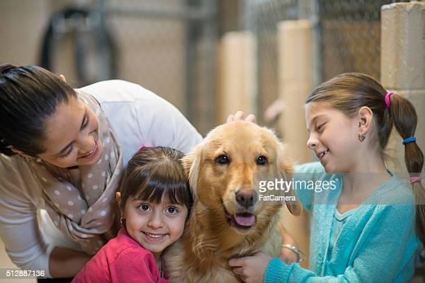 Una familia interactivo labrador dorado