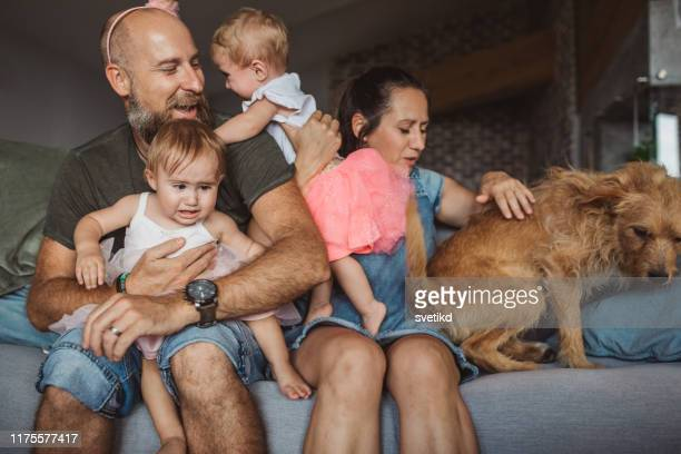 family photo fail. - domestic animals stock pictures, royalty-free photos & images
