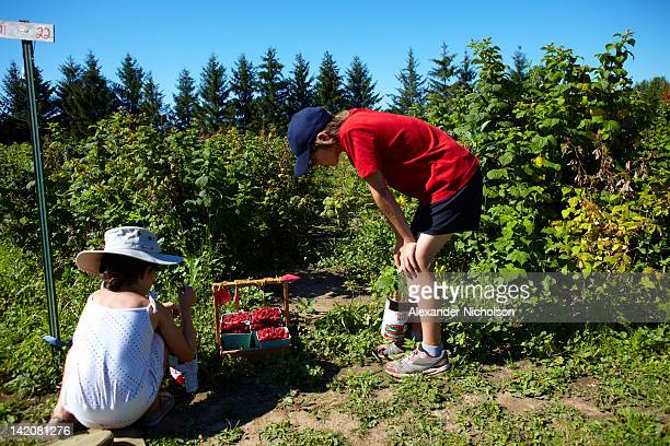 Family picking berrys in the summr sun canada