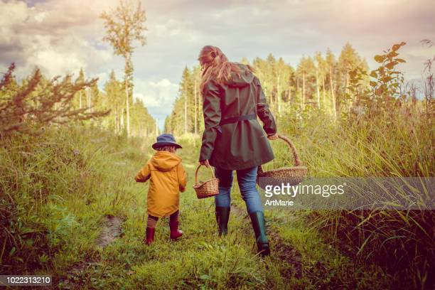 family picking mushrooms in forest - edible mushroom stock pictures, royalty-free photos & images