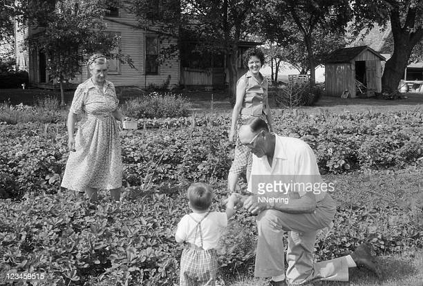 family picking strawberries 1960, retro