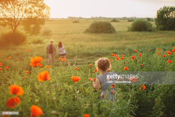 family - poppy stock pictures, royalty-free photos & images
