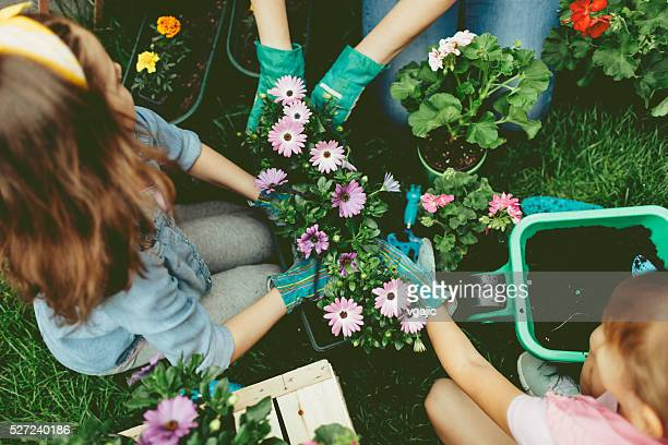 family planting flowers together. - tuinieren stockfoto's en -beelden