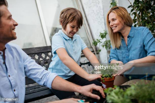 family planting herbs on their balcony - cochlear implant stock pictures, royalty-free photos & images