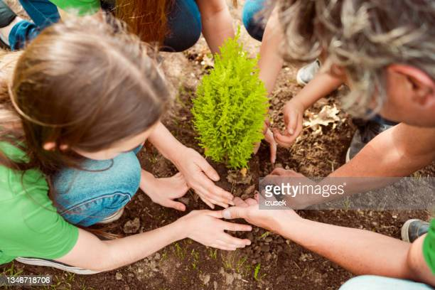 family planting together in park - izusek stock pictures, royalty-free photos & images