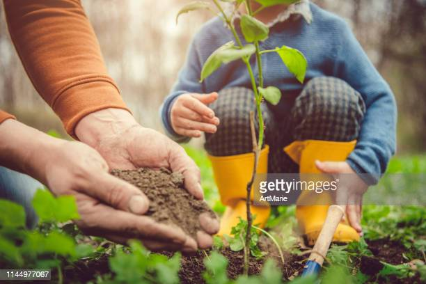 family planting tree on arbor day in spring - plant stock pictures, royalty-free photos & images