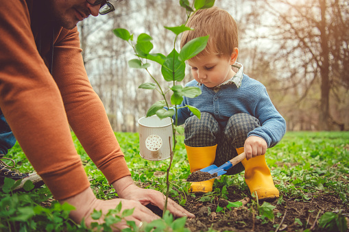 Family planting tree on Arbor day in springtime 1144977268