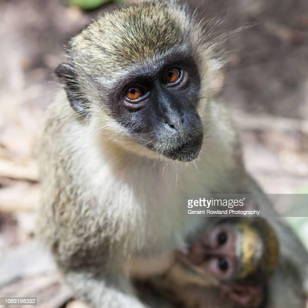 Family Portrait, Monkeys, West Africa